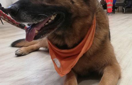 Comfort-Dog2018-Quisisana-Siena-07